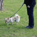 L'Ajuntament de Taradell té previst millorar els dos espais per a gossos que hi ha al poble