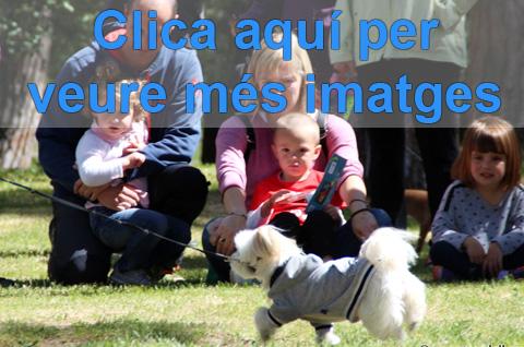 muntatge-9a-festa-civisme-2017