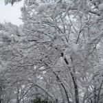 Més fotografies de la nevada