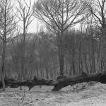 Avui es compleixen 30 anys de l'incendi que va cremar 900 hectàrees de bosc a Taradell