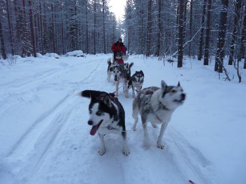 Laura i Veliville al nord de Finlàndia, viatge amb huskies
