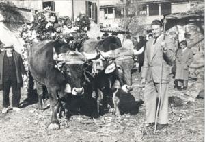 Carreta de bous de Vilacís de Vall ( no se sap l'any)