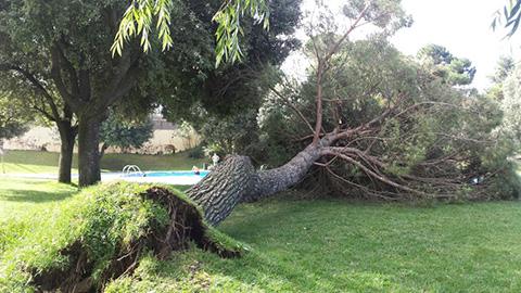 arbre-caigu-piscina-parc-esports