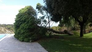 arbre-caigut-piscina-parc-esports2