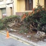 El xoc d'un cotxe obliga l'Ajuntament a arrencar els arbustos de l'inici de la carretera de Mont-rodon