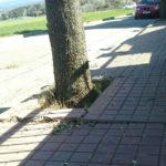Es farà una actuació per arranjar les voreres i talar els arbres de la urbanització La Madriguera
