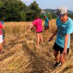24 joves s'allotgen a l'INS Taradell per participar en un camp de treball vinculat a l'Alzinar de la Roca