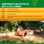 Aquest diumenge es fa la Festa del Batre a l'Alzinar de la Roca